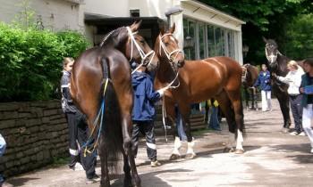 Estragon und Champ